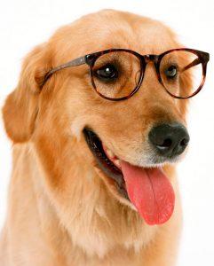 gafas para perros con cataratas